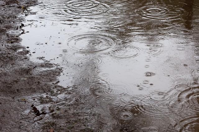 梅雨 雨 水たまり